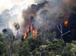 kebakaran-hutan-02